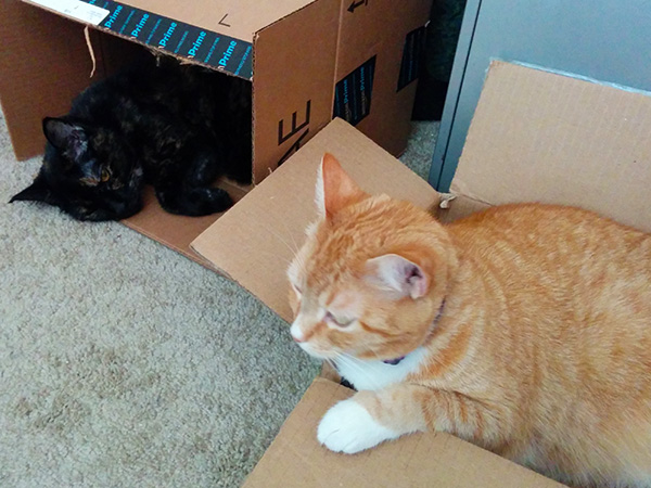 Cats. In Boxes. Surprising!