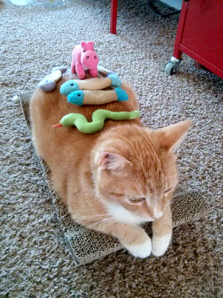 Cheddar and toy stacking.