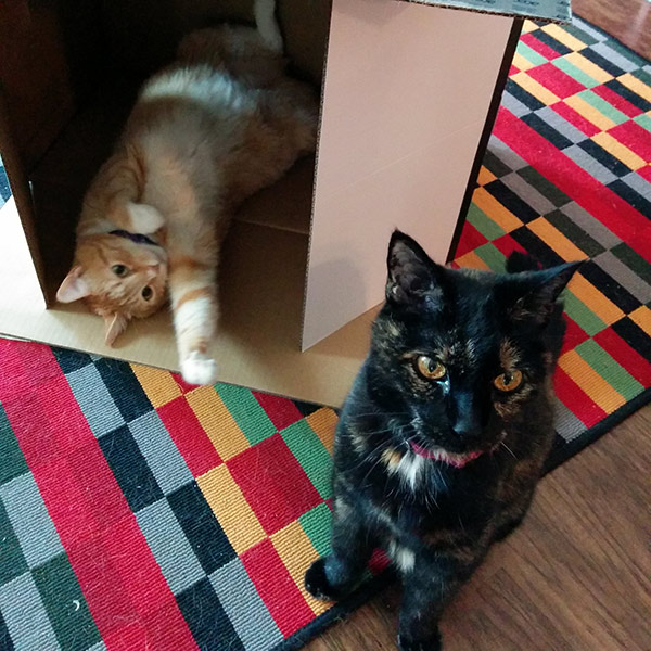 Cheddar and Trouble and a box