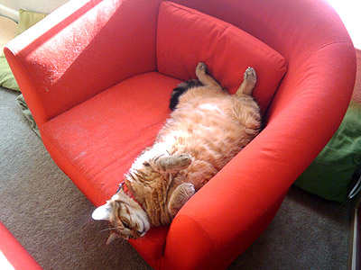 Comfy Commie in a Cat Hair Chair