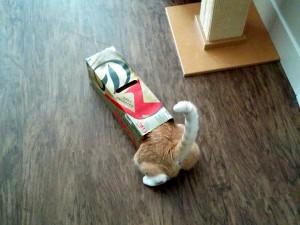 Cheddar loves boxes.